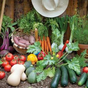 مقاله های سبزیجات