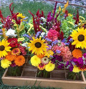 بذر گلهای تولیدی