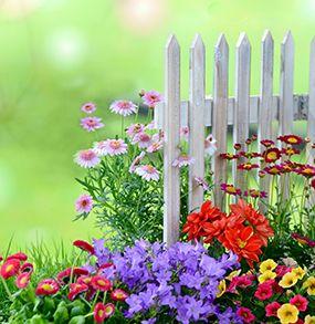 بذر گل های زینتی